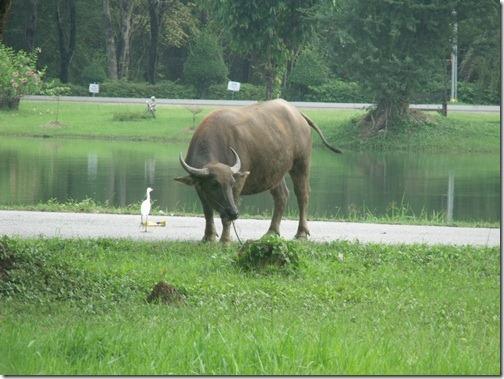 Google_Image_Search_Buffalo_20111021_02