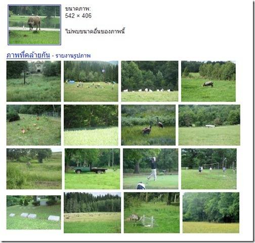 Google_Image_Search_Buffalo_20111021_03