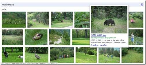 Google_Image_Search_Buffalo_20111021_04