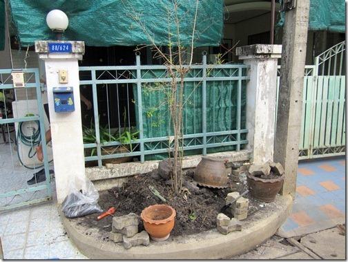 Flood_and_Plants_20111222_01