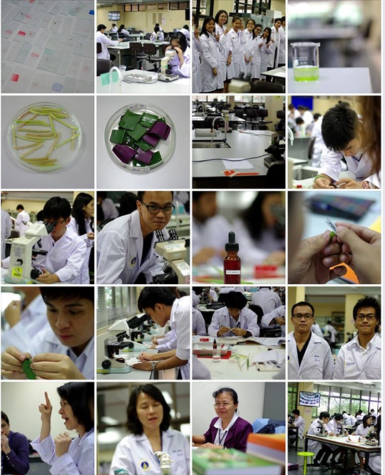 Screenshot_Cell_Lab_500px_20130624