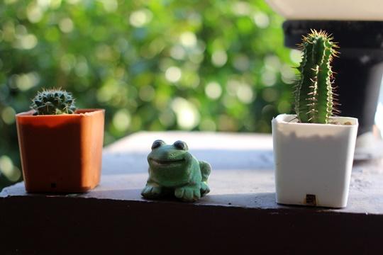 cactus_at_home_20170101