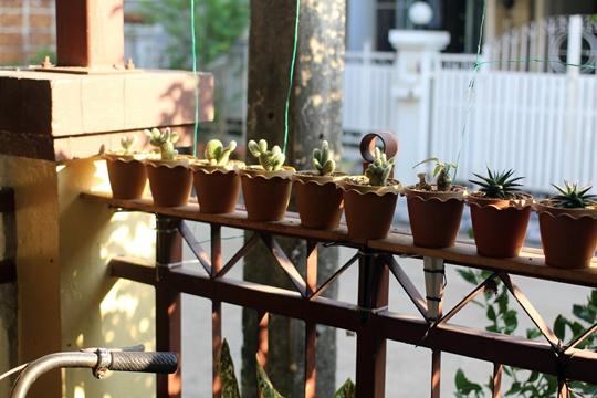 cactus_at_home_20170101b
